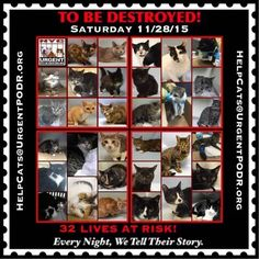 NY 32 PRECIOUS LIVES TO BE DESTROYED 11/28/15 - EACH NIGHT WE TELL THEIR STORY Info 32 CATS TO BE DESTROYED - Click for info & Current Status: http://nyccats.urgentpodr.org/montage-071215/