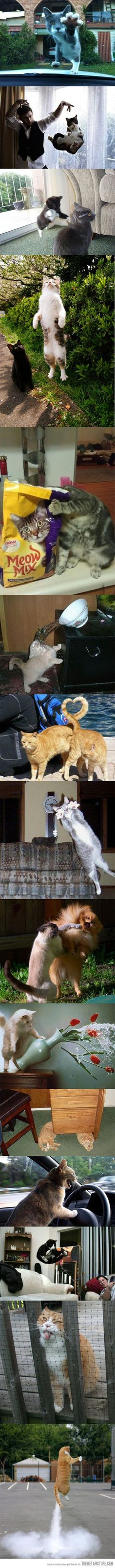 15 perfectly timed cat photos: