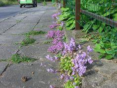 Kvetoucí chodník