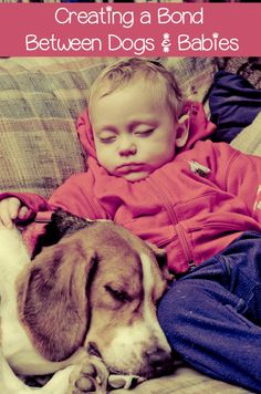 Dogs and babies go together like peanut butter and jelly, but you have to prepare the sandwich. Dog and babies can get along great if you approach it well. Human Babies, Fur Babies, Beagle Puppy, Dog Behavior, Dog Training Tips, Baby Dogs, Dog Pictures, Dog Photos, Baby Names