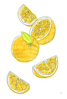 illustration citrons