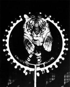 Weegee photograph