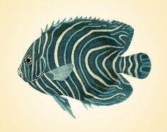 Fish Vintage art prints Old prints Nautical by AntiqueBotanicalArt, $10.00