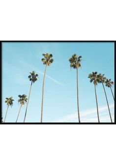 Palm Trees On Sky Landscape Sky Landscape, Palm Trees, Wind Turbine, Tropical Posters, Beach, Flowers, Plants, Palm Plants, Moldings