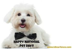 Happy National Pet Day! #nationalpetday