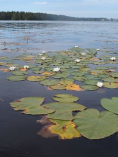Finish Lake and summer