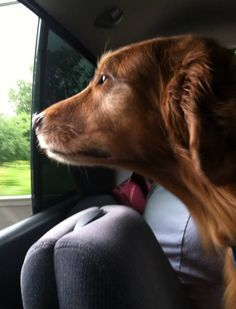 Car rides with your pup are always fun, but in the summer can be very dangerous. Just remember how hot a parked car can get, even in the shade.