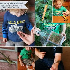 Joys of the Journey: Learning About Lizards