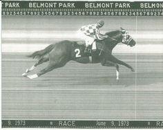 1973 - SECRETARIAT - Belmont Stakes Finish Line Camera Photo in Sports Mem, Cards & Fan Shop, Fan Apparel & Souvenirs, Horse Racing   eBay