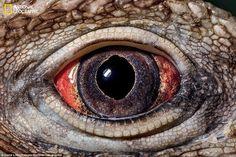 ภาพ close up ดวงตาของสิ่งมีชีวิตอย่างใกล้ชิด จนคุณคิดไม่ออกเลยว่ามันคือตัวอะไรกันบ้าง...?
