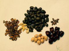 Cómo seleccionar, recolectar y conservar semillas. | Planeta Huerto
