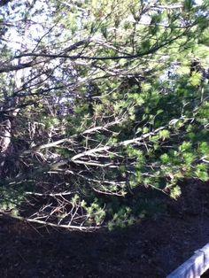 PINERY PARK NEAR  RENTAL COTTAGE HUMMINGBIRD COTTAGE GRAND BEND/BAYFIELD: NOVEMBER 11,2012 VISIT TO PINERY PROVINCIAL PARK GRAND BEND