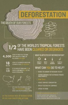 1/2 of the World Tropical Forest have been cleared or degraded.