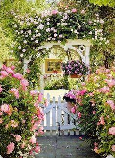 Roses, Roses. Beautiful Arche