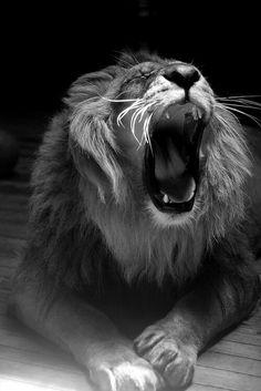El mejor leon