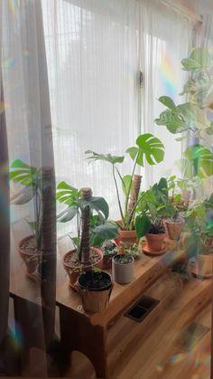 Urban plant jungle