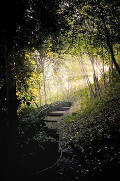 Old steps in the deep woods lead towards the light. Photo by Robert,s