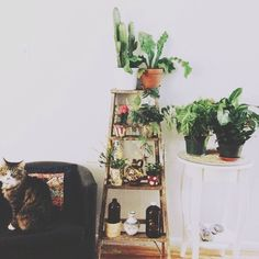 Cat, plants, ladder. Great combo.