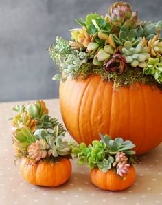34 Pumpkin Decorations For Fall - Pumpkin Succulent Harvest Decoration - Easy DIY Pumpkin Decor Ideas for Home, Yard, Outdoors - Cool Pumpkin Decorating Ideas for Adults and Kids Party, Creative Crafts With Paint, Glitter and No Carve Projects for Hallowe Pumpkin Centerpieces, Thanksgiving Centerpieces, Centerpiece Ideas, Thanksgiving Ideas, Pumpkin Arrangements, Thanksgiving Table Decor, Outdoor Thanksgiving, Fall Floral Arrangements, Pumpkin Candles