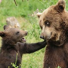 Now Ma I can't be you're lil cub furever!