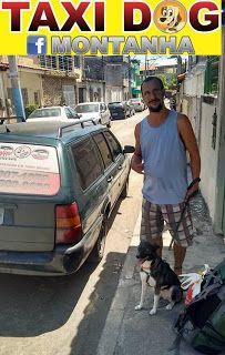 """TAXI DOG MONTANHA TRANSPORTE DE ANIMAIS NO RIO DE JANEIRO: CATARINA (SRD)05/02/2016 -- Olha aí a linda """"Catar..."""