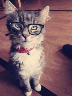 Soy un gato muy guapo e intelectual                                                                                                                                                      Más