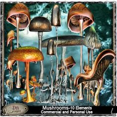 Mushrooms Grabbag