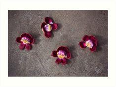 #Buddha Flowers, #Vietnam | #TravelPhotography #travelphoto #ArtPrint #flowers #beautifulflowers #bloomingflowers #luciaeggenhoffer