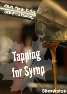 You can tap many types of trees for syrup. The list is quite long and includes all varieties of maples, most walnuts, several birches, as well as sycamores and ironwoods.