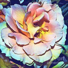 Multi Color Rose - Photoart Spuare