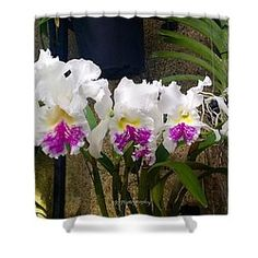Secret Garden Shower Curtain by Jeannie Rhode Photography