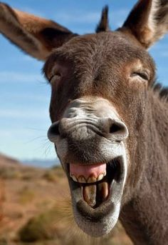 Donkey With Big Smiling Funny Face Image. Donkey With BMW Logo Funny Picture For Whatsapp. Donkey With Closeup Face Funny Image. Funny Animal Images, Cute Funny Animals, Cute Baby Animals, Funny Cute, Funny Images, Funny Pictures, Hilarious Photos, Funny Dogs, Hilarious Memes