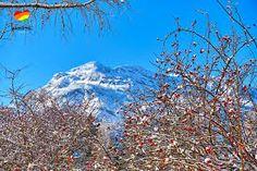 Bildergebnis für bergfex hagertal Mount Rainier, Mountains, Nature, Travel, Naturaleza, Viajes, Destinations, Traveling, Trips