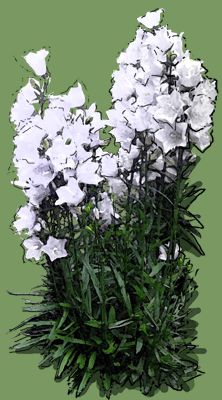 Campanula pericifolia 'Alba' Puzzle, Plants, Puzzles, Riddles, Planters, Jigsaw Puzzles, Plant, Planting