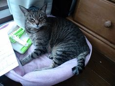 Today's cat on 4th June 2012 by ganchan2, via Flickr