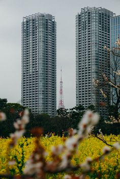 Favorite Places // Hamarikyu Gardens
