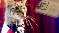 A French cat looks for love in America.  The best video ever, you've got to see it.