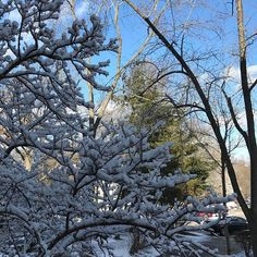 #snowfilledtrees #sunny #snow #lovesnow #whiteeverywhere #windy #snowstorm #eastcoast #iSANs