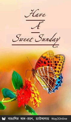 Good morning cards, messages,GIF and quotes to your friends, colleagues and family and let them know Happy Sunday Images, Good Morning Sunday Images, Good Morning Cards, Happy Sunday Quotes, Good Morning Gif, Good Morning Flowers, Good Morning Messages, Blessed Sunday, Sunday Gif