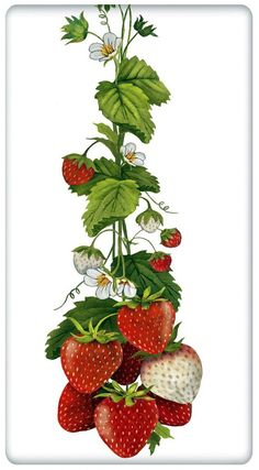 Mary Lake Thompson Flour Sack Dish Towel - Hanging Vine Strawberries, Measures x Botanical Drawings, Botanical Illustration, Botanical Prints, Dish Towels, Tea Towels, Strawberry Kitchen, Strawberry Decorations, Strawberry Fields, Strawberry Art