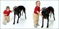 Lucas has cerebral palsy, and he has previously relied on walkers and crutches to help him balance while he walks. Now he has a service dog that helps more than crutches or walkers could ever do. The dog KNOWS just how fast Lucas can move and adjusts accordingly. Amazing what Assisatance dogs are capable of.