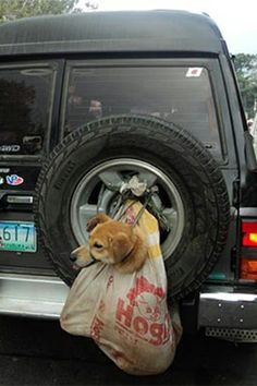 Network for animals - please sign petition to stop the dog meat trade . Thank you
