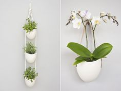 Light + Ladder Hanging Wall Planters | It Takes One To Grow One | You've always liked the idea of being someone with a plant in her home. But the responsibility scares you off. (The water! The sunlight! The water again!) Let us walk you through it one step at a time. | New York Daily Candy