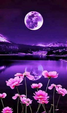 29 Super Ideas For Wallpaper Backgrounds Beautiful Moon Beautiful Nature Wallpaper, Beautiful Landscapes, Great Backgrounds, Wallpaper Backgrounds, Bird Wallpaper, Wallpaper Earth, Purple Wallpaper, Trendy Wallpaper, Amazing Photography