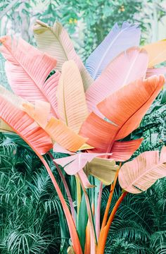 House Remodeling Is Residence Improvement This Image Is Everything Those Lush Leaves, Those Soft Pastel Tones, The Joy Radiating La Estilo Tropical, Tropical Vibes, Vsco, Drive In, Deco Addict, Pink Leaves, Leaf Coloring, Color Inspiration, Mother Nature