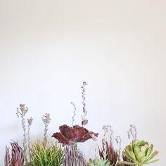 Under the sea-like succulent collection and photo by Dalla Vita.
