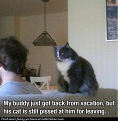 Yup I do believe that holding a grudge is an inherent trait in all felines!