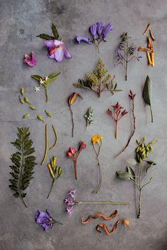 Spring flowers, Mexico. Photo by illustrator Geninne  Zlatkis.