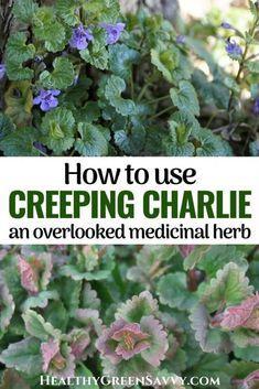 Healing Herbs, Natural Healing, Medicinal Weeds, Edible Wild Plants, Wild Edibles, Growing Herbs, Edible Garden, Edible Flowers, Herbal Medicine