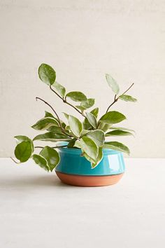 Magical Thinking Ista Planter - Urban Outfitters